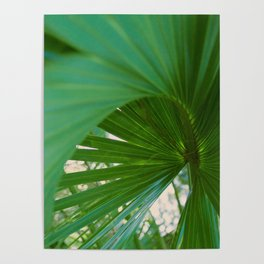 Curvy Fern Jungle Style Poster