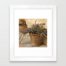Courtyard Plants Framed Art Print
