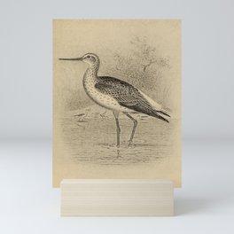 Vintage Illustration - North American Shore Birds (1895) - American Avocet Mini Art Print