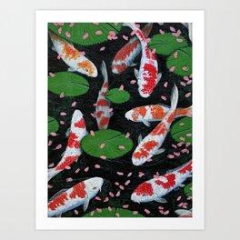 Koi With Fallen Cherry Blossom Art Print