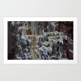 Bass Rock Scotland Art Print