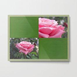 Pink Roses in Anzures 6 Blank Q5F0 Metal Print