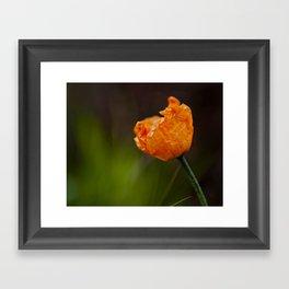 New Poppy Framed Art Print