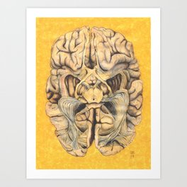 Brain section showing visual system pathway Art Print