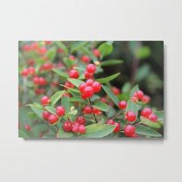 Chokeberries Metal Print