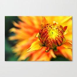 Budding Flower Canvas Print