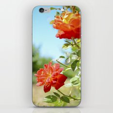 Roses in Santa Ynez California Vineyard iPhone & iPod Skin