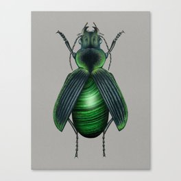 Malachite Beetle Canvas Print