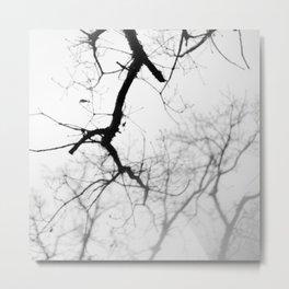 Winter woods Metal Print