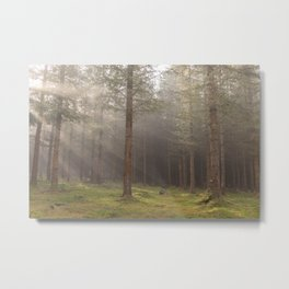 Mystical forest - North Kessock, The Highlands, Scotland Metal Print