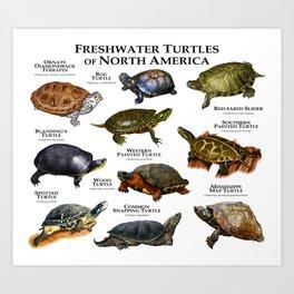 Freshwater Turtles of North America Art Print