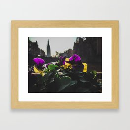 Bruges yellow and purple flowers Framed Art Print