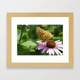 Variegated Fritillary Butterfly Framed Art Print