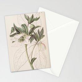 Flower 034 helleborus orientalis Eastern Hellebore25 Stationery Cards