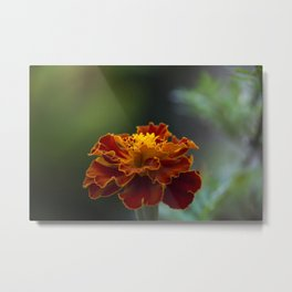Flower Metal Print