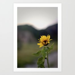 FLOWER OF SUN Art Print