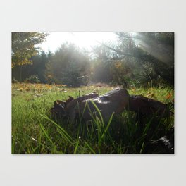 Mushrooms and Sunlight Canvas Print