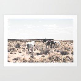 Mexican Horse / Contemporary Art Print