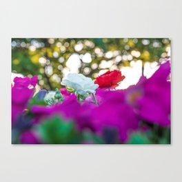 White flower during golden hour Canvas Print