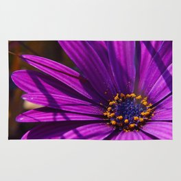 Purple African Daisy Close Up Rug