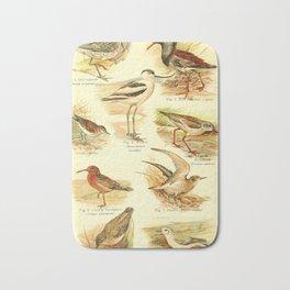 William Playne Pycraft - A Book of Birds (1908) - Plate 15: Plovers, Gulls and Auks Bath Mat
