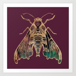 Sphinx Moth Art Print