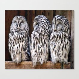 Owl Trilogy Canvas Print