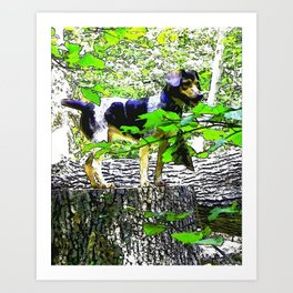 Catahoula Leopard Dog Watercolor Art Print