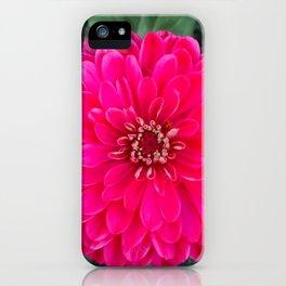 Dahlia star iPhone Case