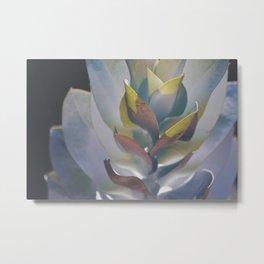 Eucalyptus Shadow and Light Metal Print