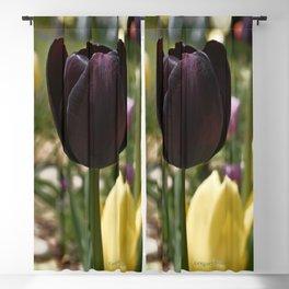 Wine Tulip Blackout Curtain