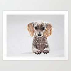 Bath Time for Rylie  (poodle) Art Print