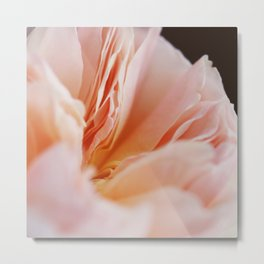 English Rose #1 Metal Print