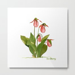 Pink Lady's Slipper Orchid Metal Print