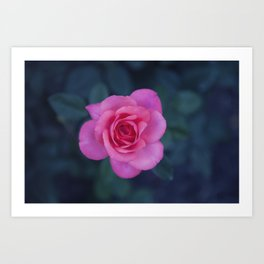 Rose Study 6 Art Print
