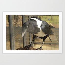 Blind Raven Art Print