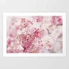 PINK AND WHITE CHERRY BLOSSOM Art Print
