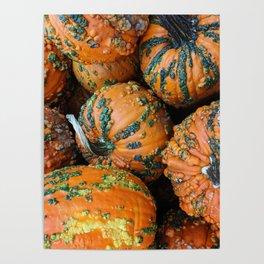 Nestled - Autumn Pumpkins Poster