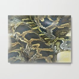 Golden Boa Metal Print