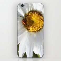 Lady Bug and Daisy iPhone & iPod Skin