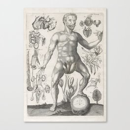 Male Anatomical Medical Chart from 1702 Canvas Print