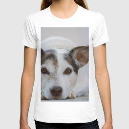 J.R Terrier T-shirt