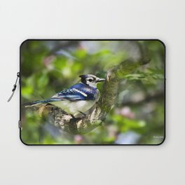 Spring Blue Jay Laptop Sleeve