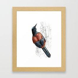 Mr Tieke , New Zealand Saddleback bird Framed Art Print