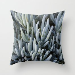 Succulents in Blue Throw Pillow