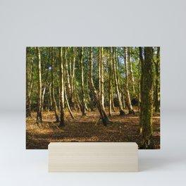 Silver Birch Tree Trunks Mini Art Print