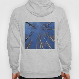 Nature: The trees trunk with  blue sky background. Hoody
