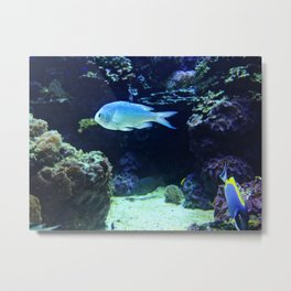 fish underwater ll Metal Print