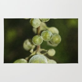 Bunch of grapes Rug
