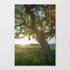 Morning In Danville Canvas Print